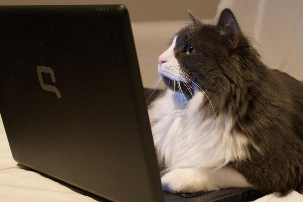 wpg-cat.jpg