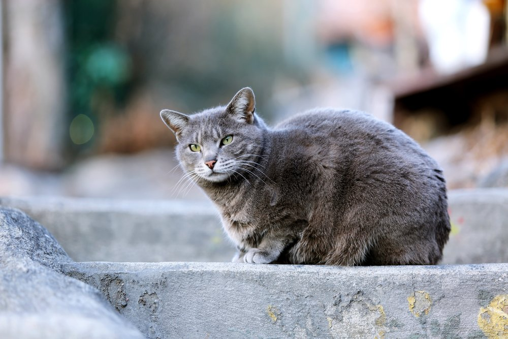 More than 100,000 cats spayed/neutered since 1995! Stray or pet, one kitten or a large colony - we can help!