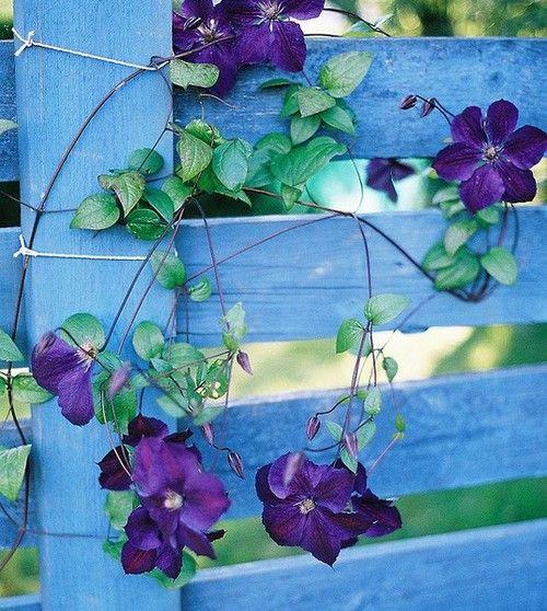 Purple pretties on the planks
