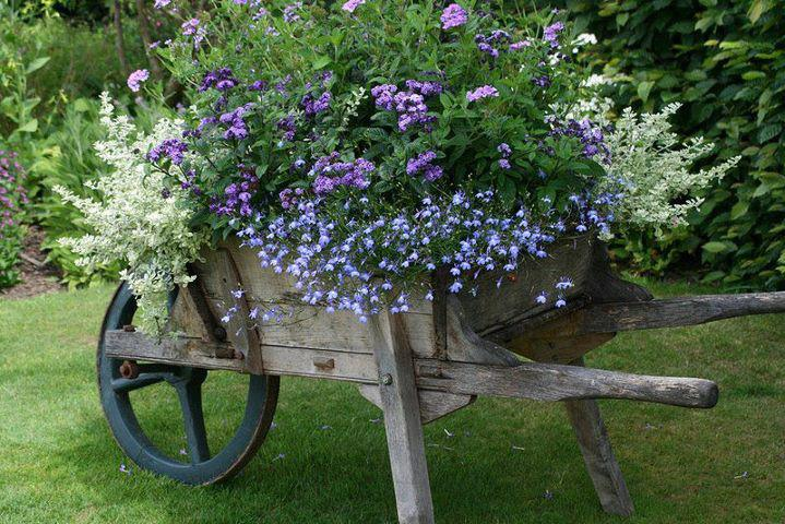 Wheelbarrow full of flowers.