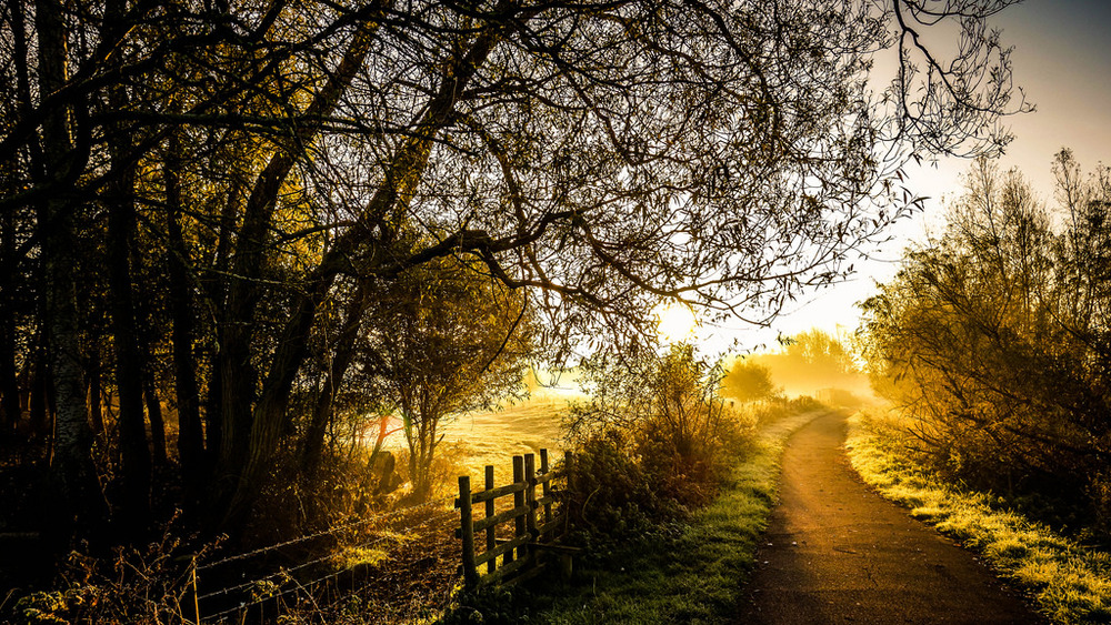 englishcottagedreams: Path by the Nene on my way to work (by Jason Rolls) #Beautiful #path #light #Sunrise #golden