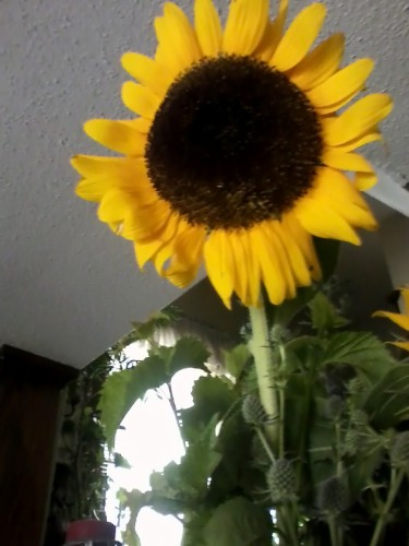 sunflower-copy-e1437314351925.jpg