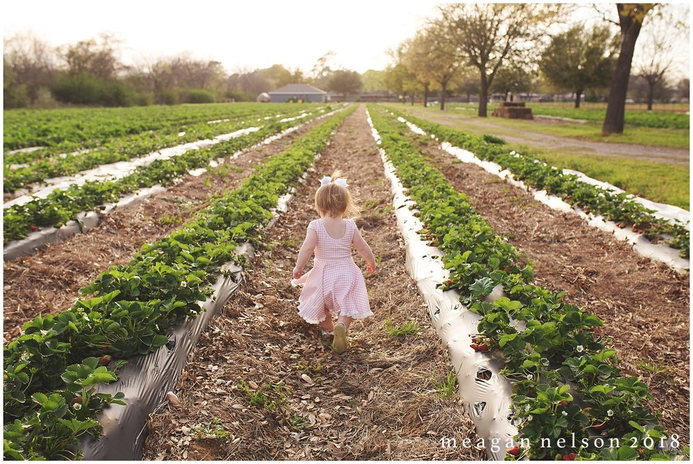 strawberry_patch_session_fort_worth_photographer49.jpg