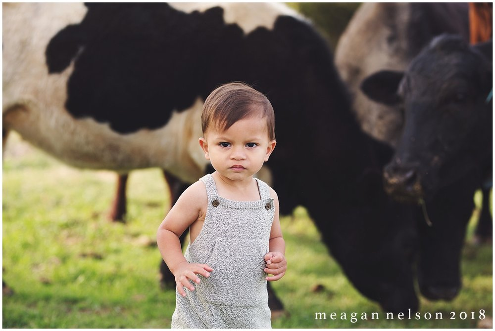 fort_worth_family_photographer_cow_mini_sessions030.jpg