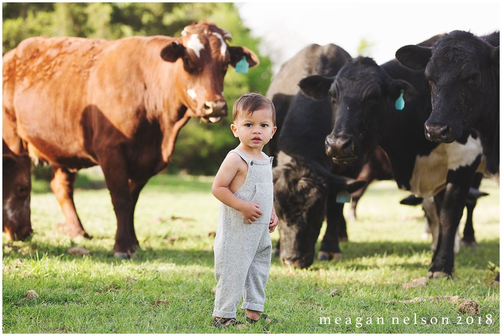fort_worth_family_photographer_cow_mini_sessions034.jpg