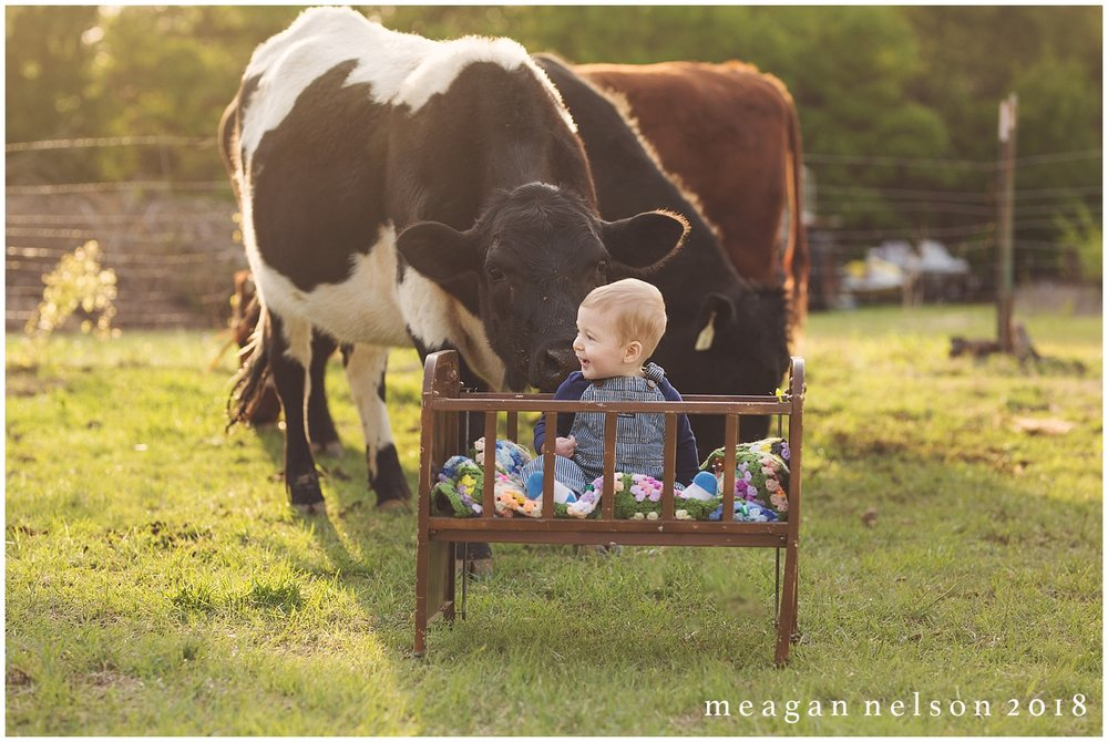 fort_worth_family_photographer_cow_mini_sessions037.jpg