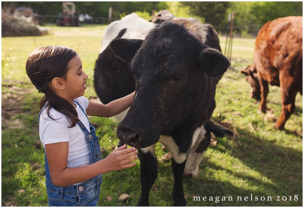 fort_worth_family_photographer_cow_mini_sessions045.jpg