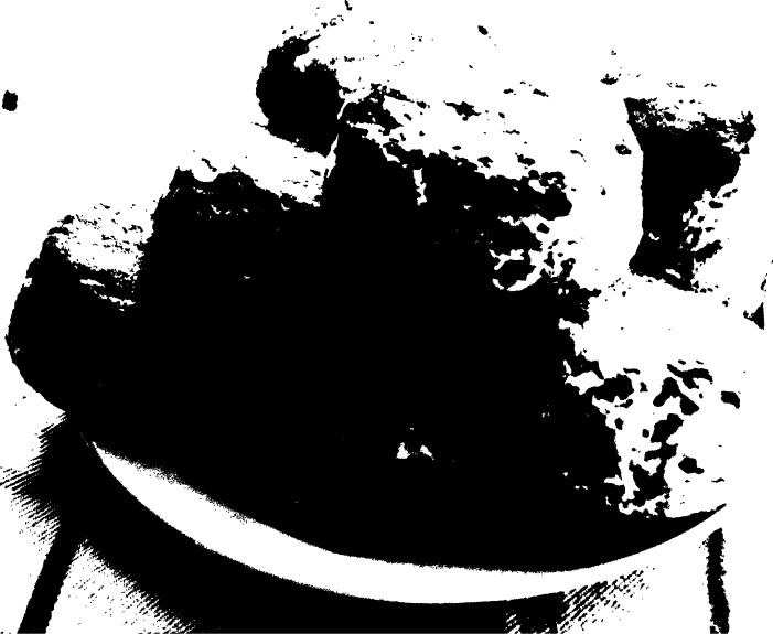 biscuit.jpg
