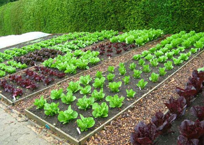 vegetable-garden_resize.jpg