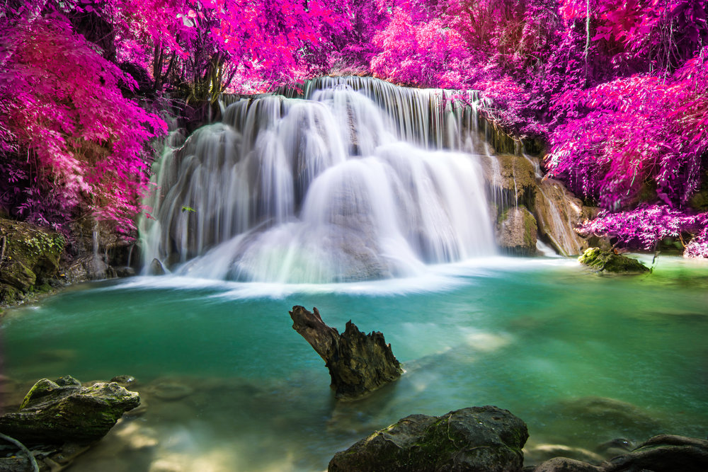 Waterfall Pink Azelias.jpg