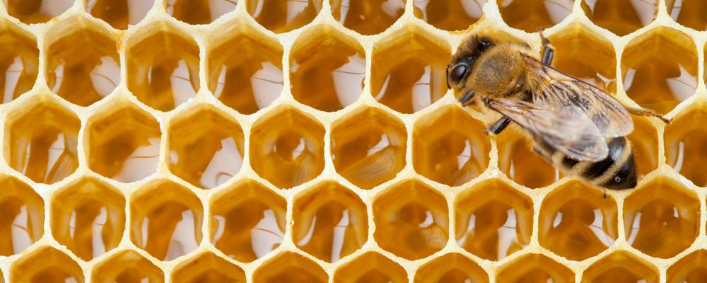 Honey Comb w: Bee.png
