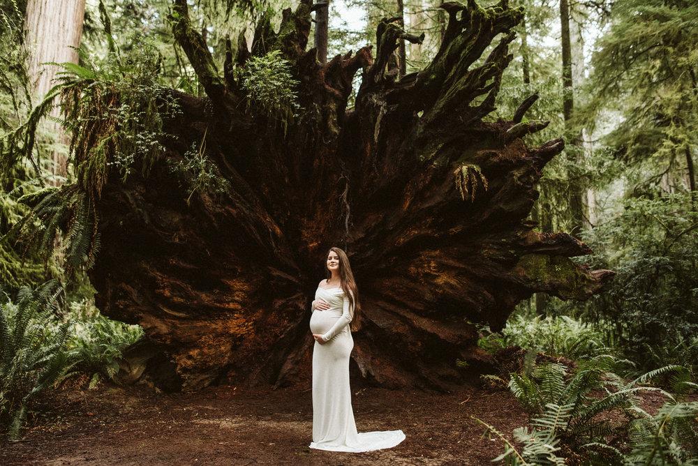 Maya Redwoods Maternity-32.jpg