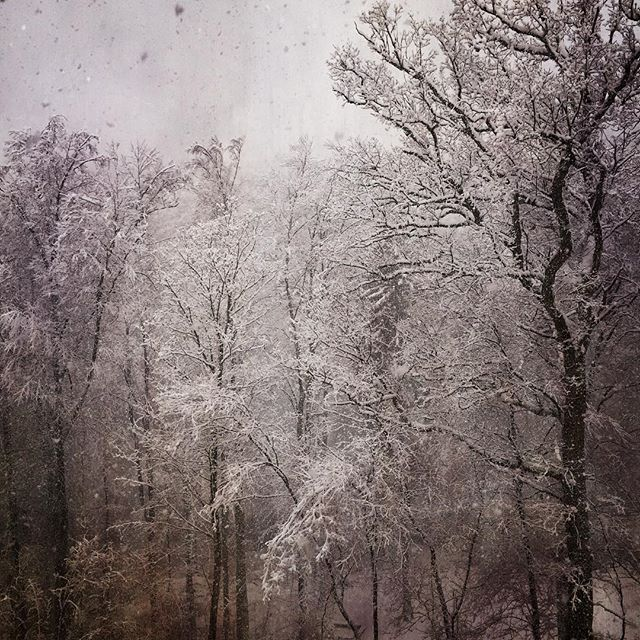 Winter, snow, makes sense