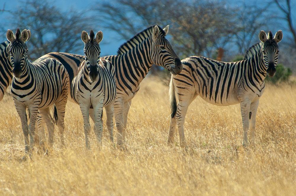 namibia-2006-25.jpg