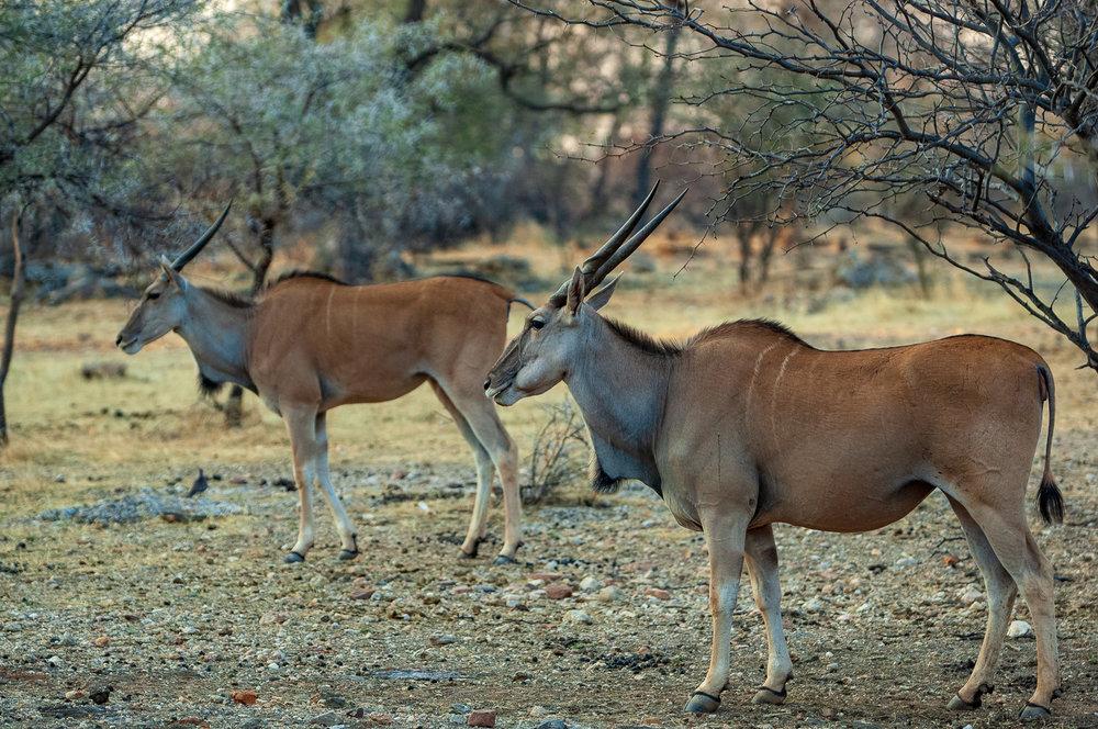 namibia-2006-29.jpg