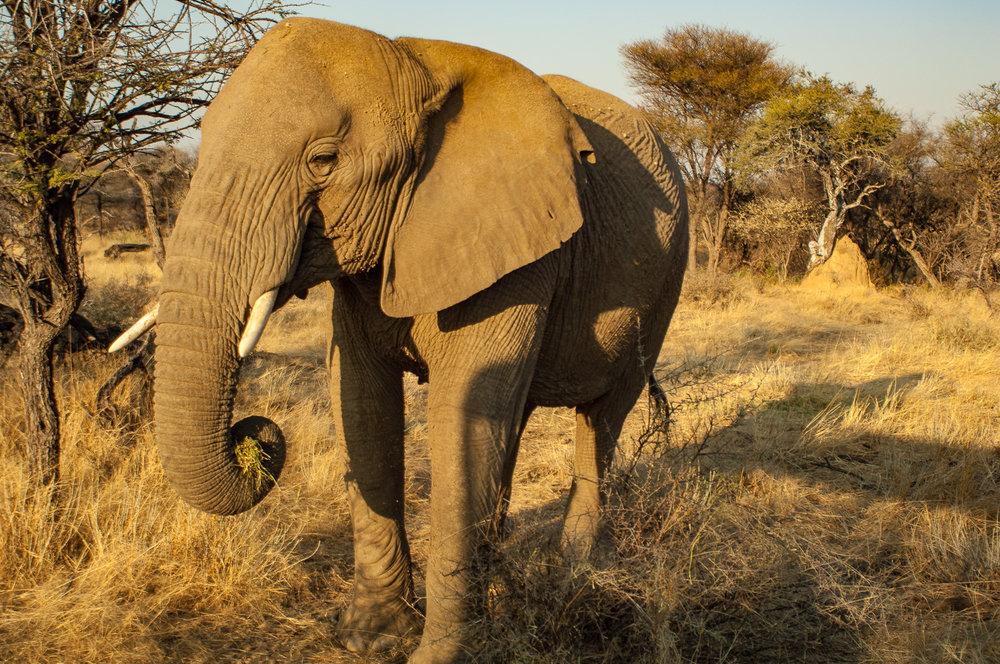 namibia-2006-27.jpg