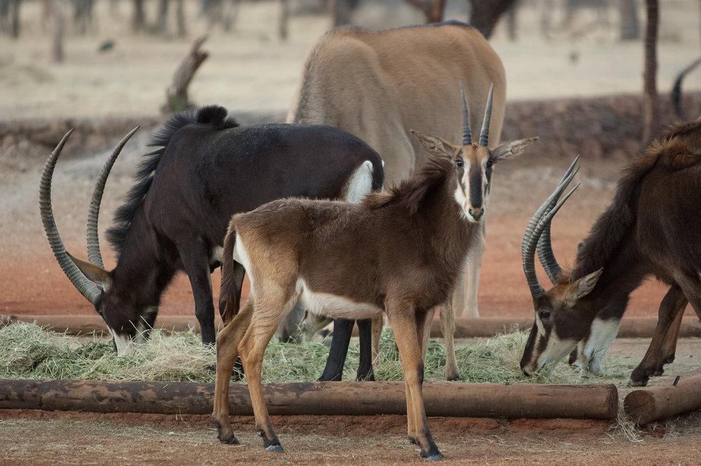 namibia-2006-31.jpg
