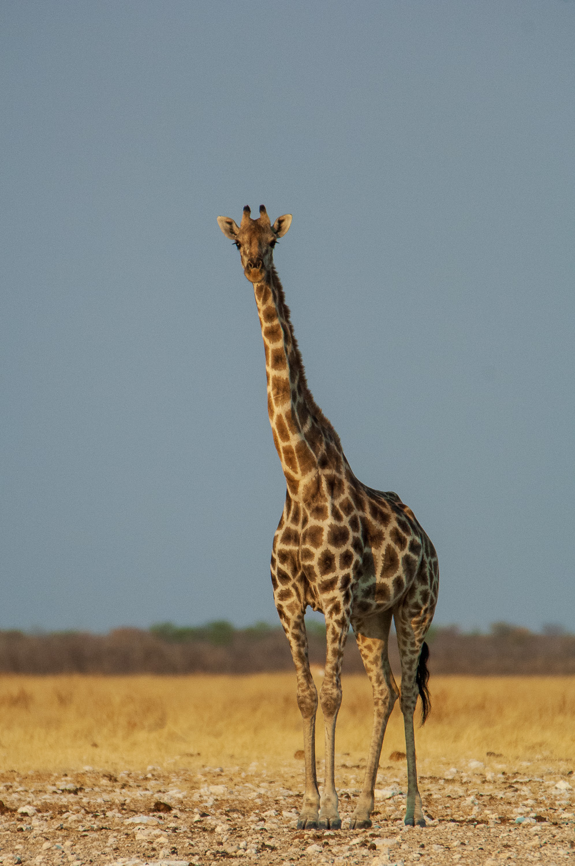 namibia-2006-35.jpg