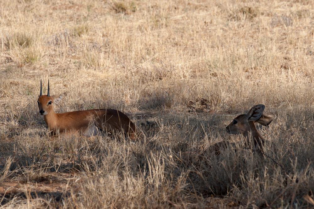 namibia-2010-3.jpg