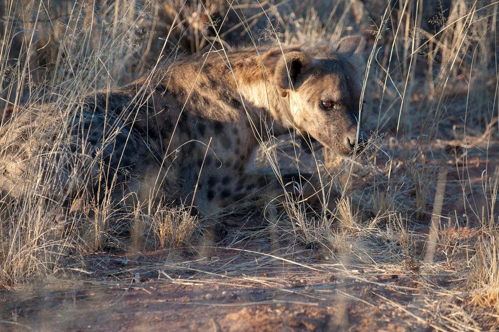 namibia-2010-5.jpg