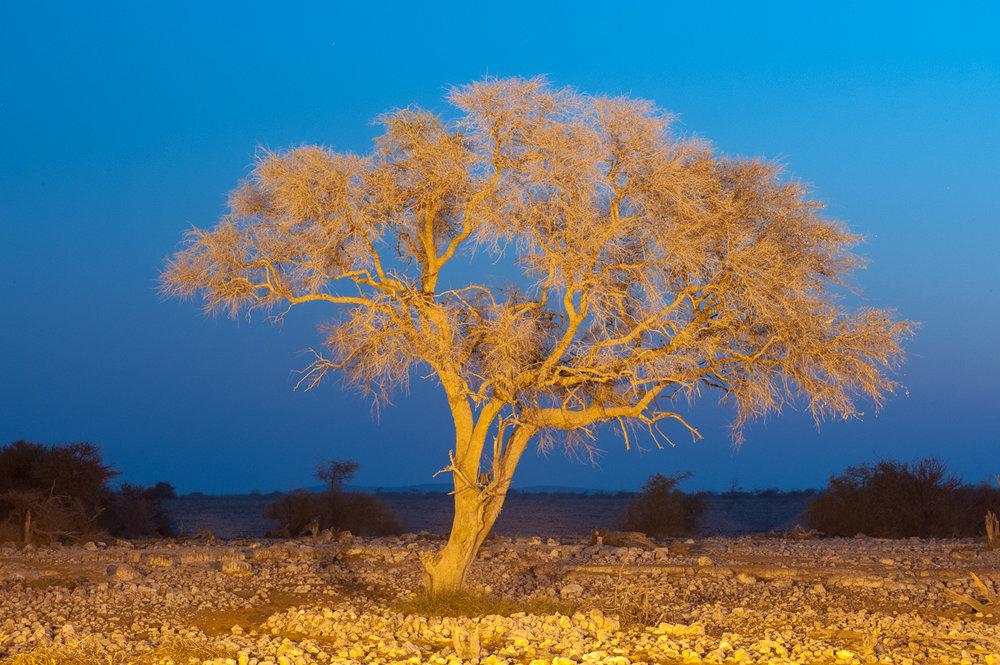 namibia-2010-11.jpg
