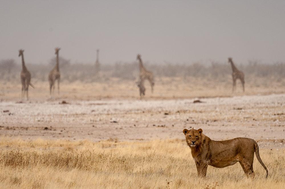 namibia-2010-19.jpg