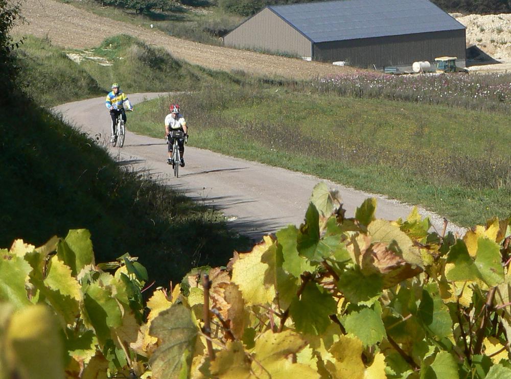 på cykel bland vinodlingar.