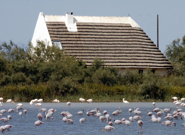 Camargue, vaktstuga och flamingofåglar.foto Bruce Tuten