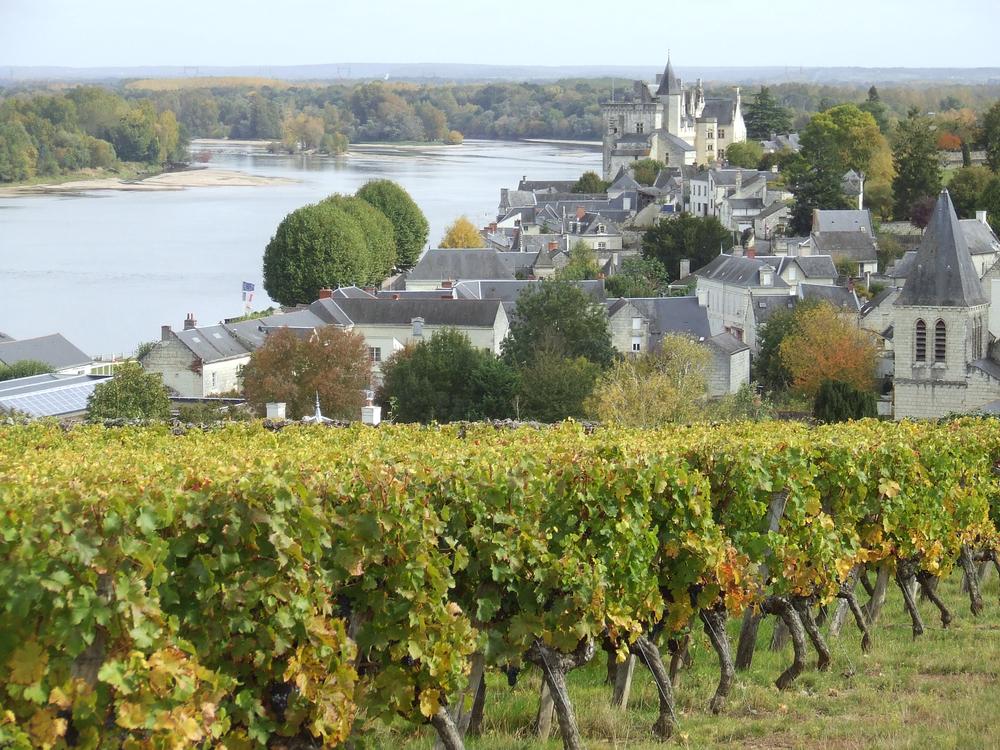 montsoreau, slottet och vinodlingar. foto lvt.