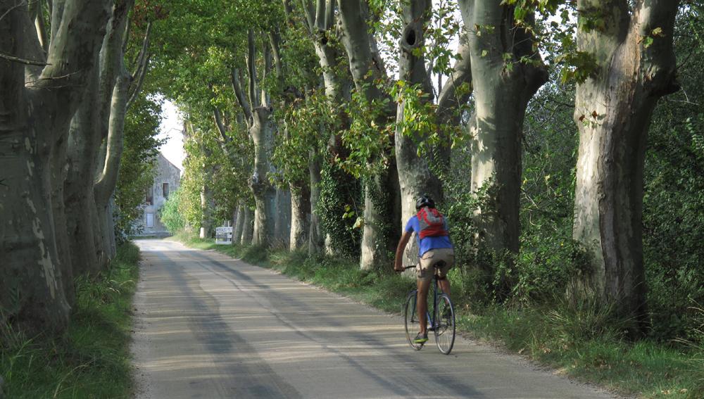 platanallé i Provence. foto f. ferreira