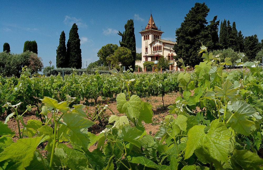 vingården La Plana. foto Mick Stephenson