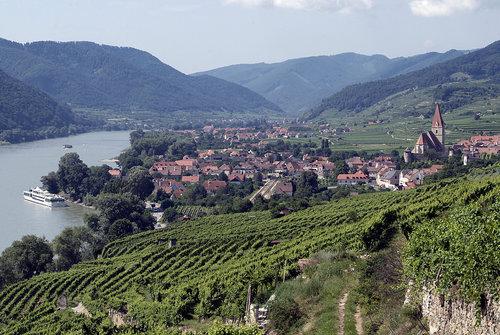 vinodlingar i wachau