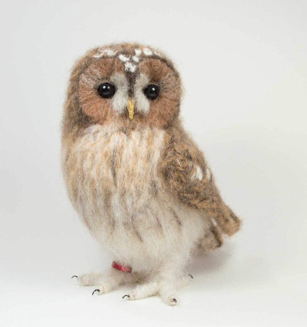 Alpaca Face Tawny Owl — Jose Her...