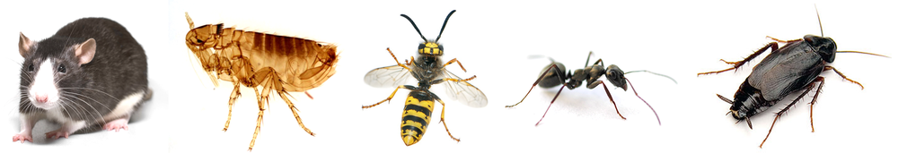 Pest Control North Wales  Professional Pest Control in North Wales