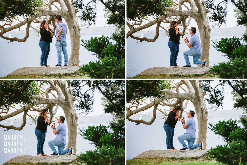 Sydney Harbour Shark Island marriage proposal 2