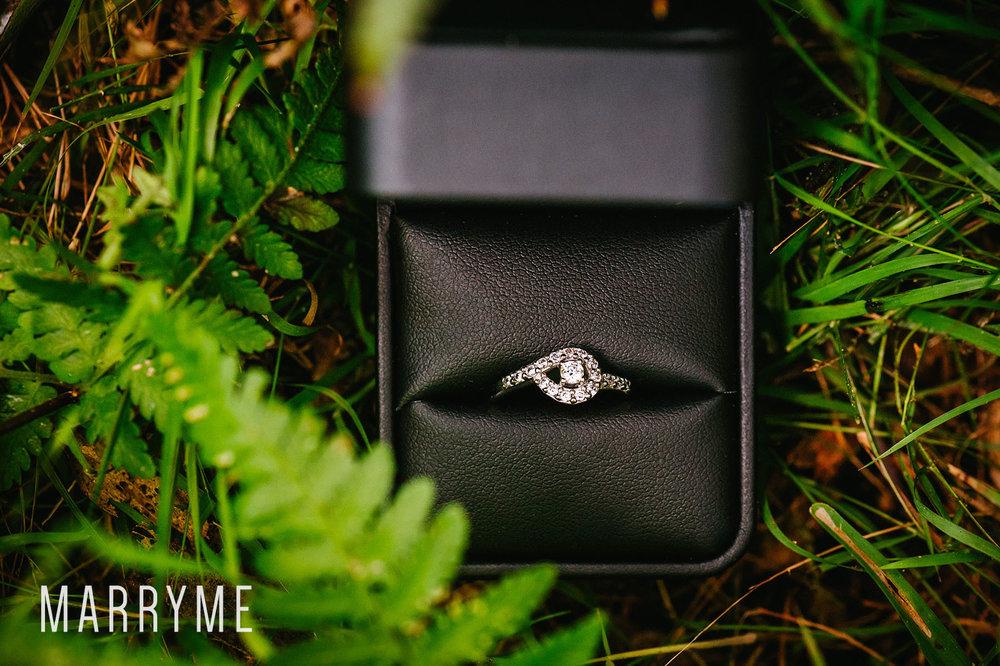 1_Centennial_Park_Parklands_marriage_proposal_sydney_marryme