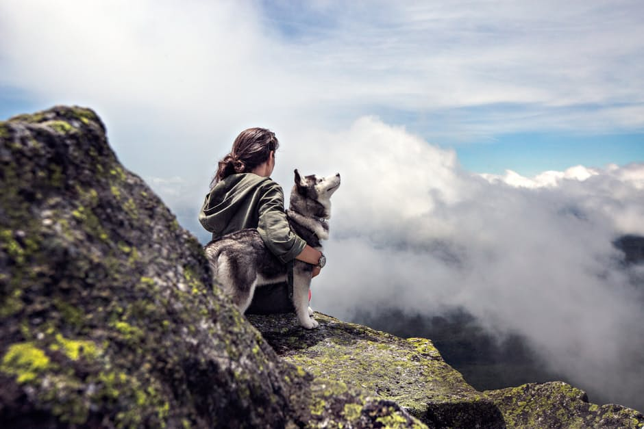 Imagine travelling the world with your beloved fur friend!