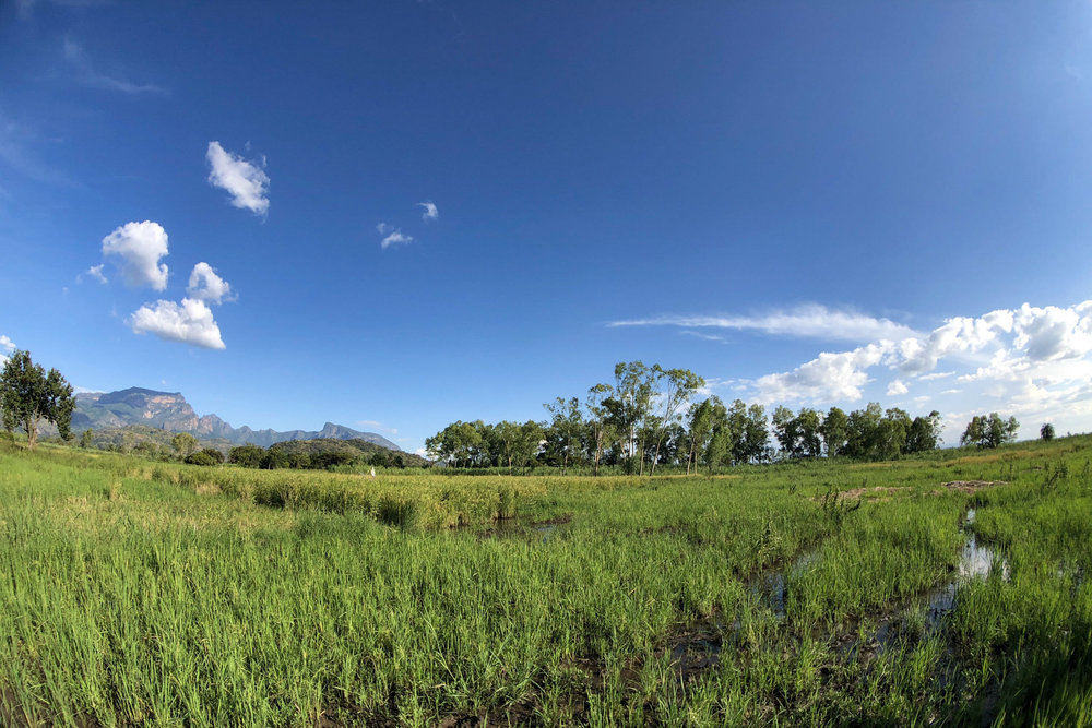 Peter's rice fields.