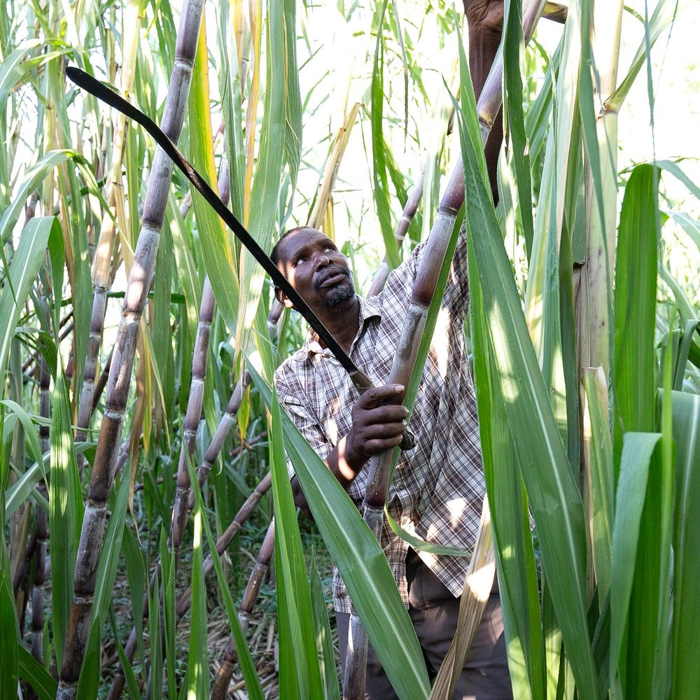 Peter , Uganda: A prominent rice farmer with big ambitions.  Click here to find out more.