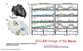 2012 AJP Image of the Week