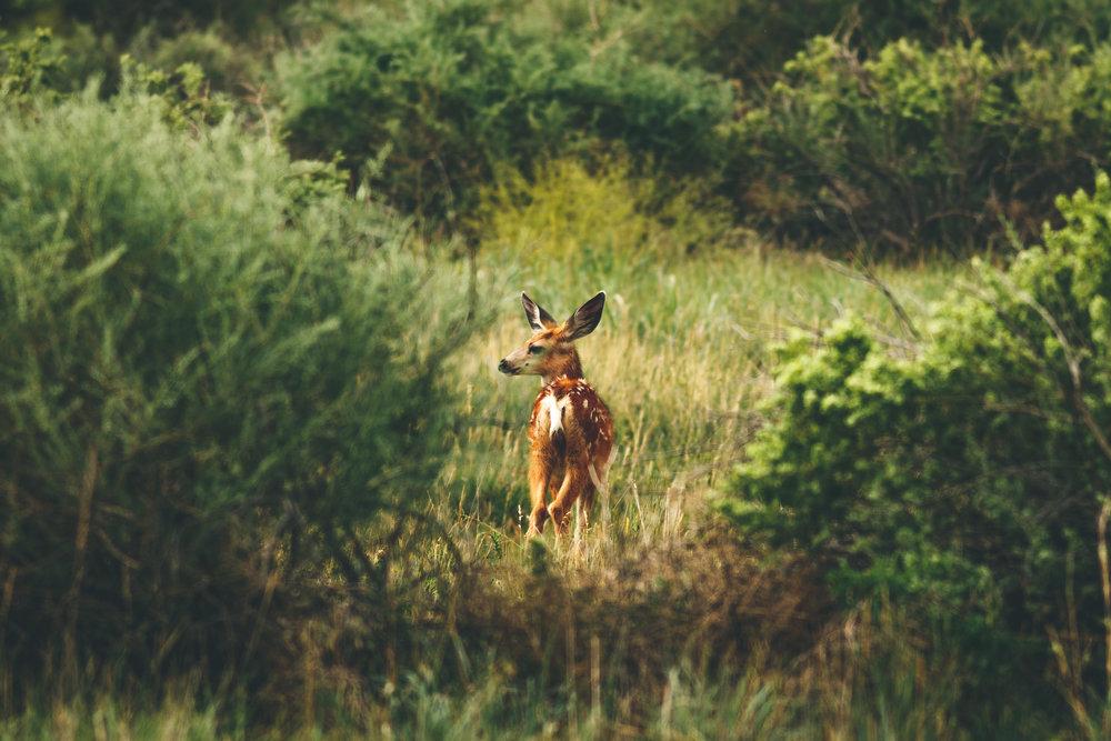 deer-1990.jpg