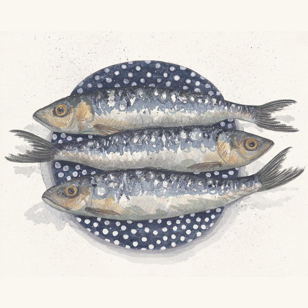 Sardines by Kirsten