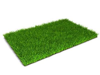 Turf Grass.jpg