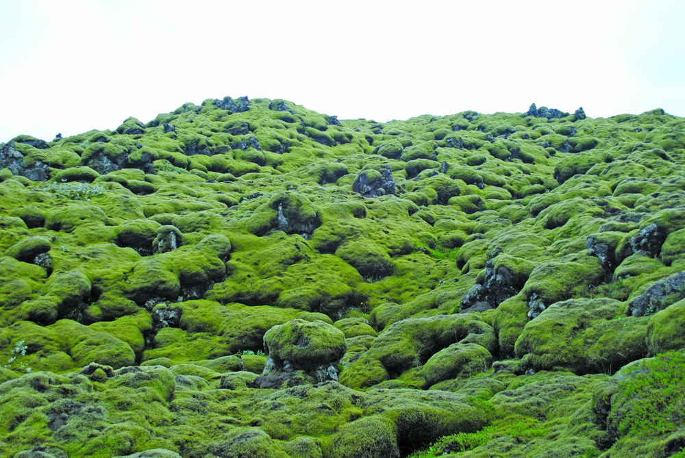 Miles of moss covered lava fields