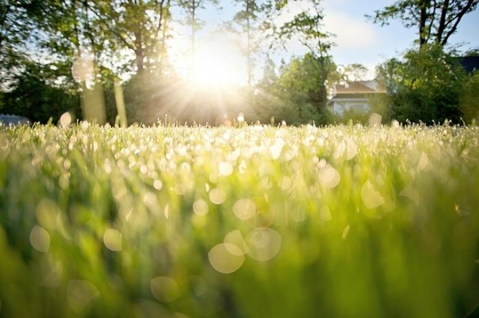 dew-on-grass-788059_640.jpg