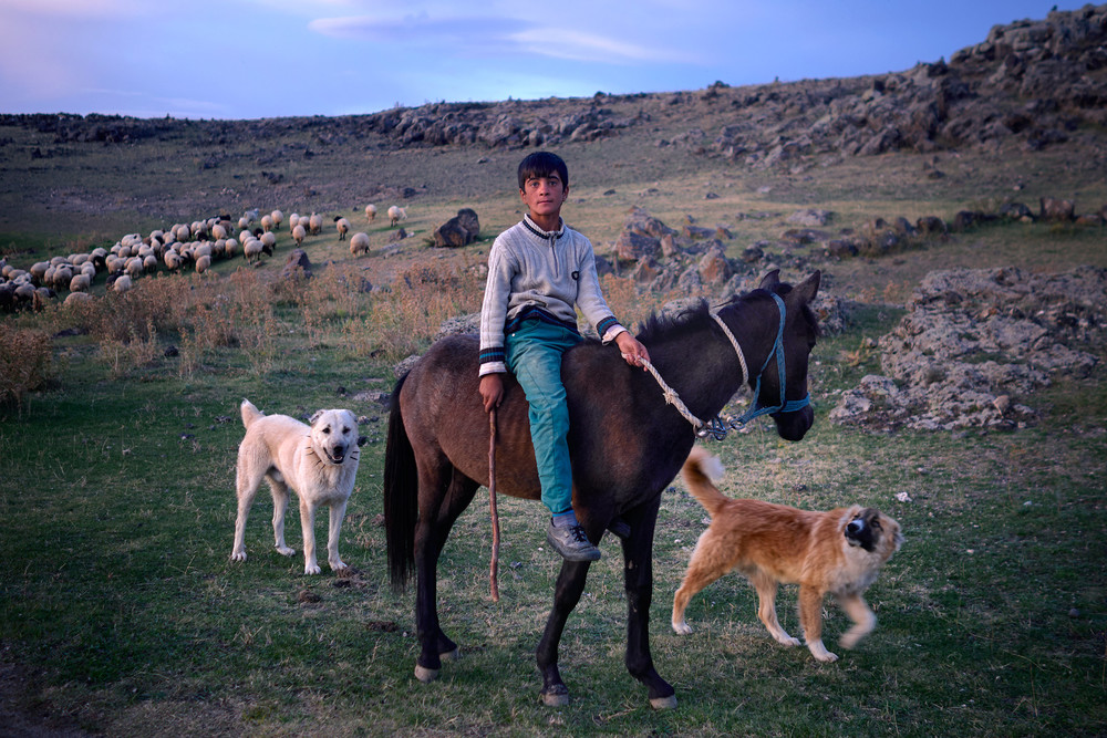 Faroukh on his horse with his dogs