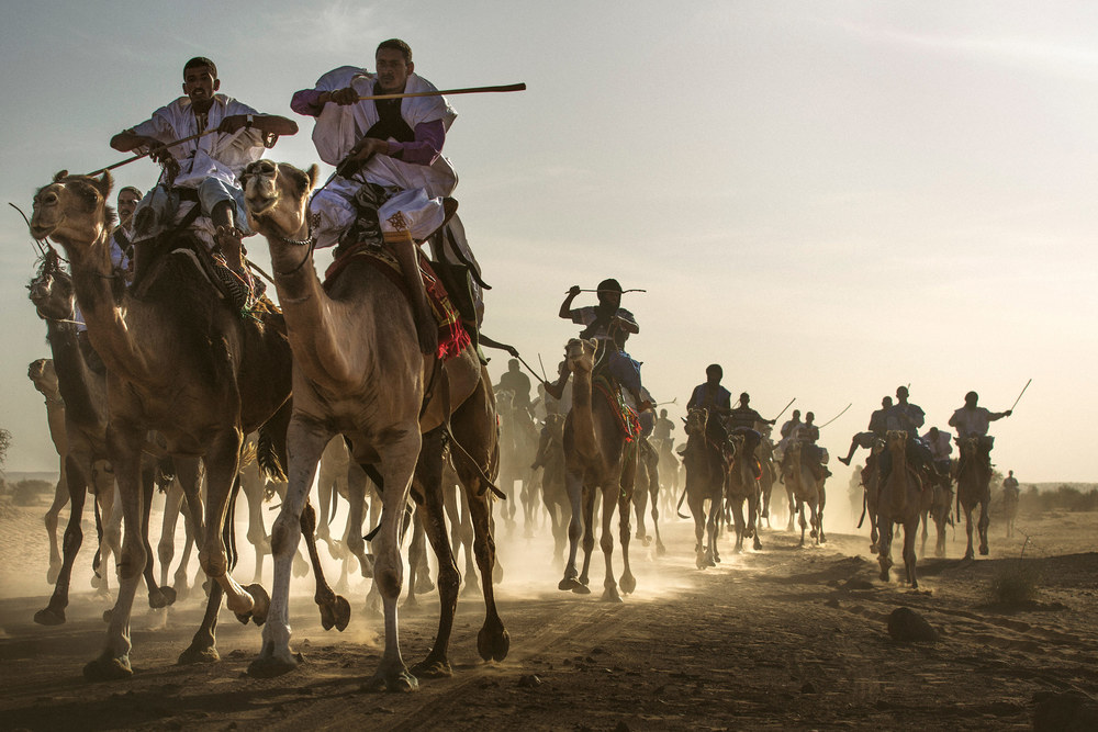 Camel race gets intense