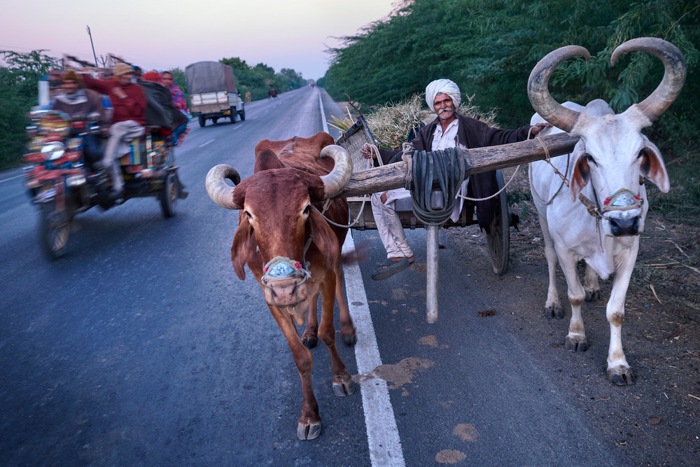 Man with bullock along a road