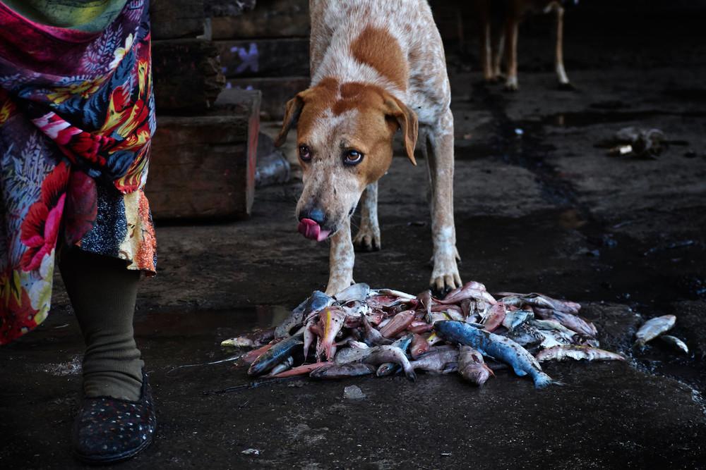 Dog waiting to grab a fish