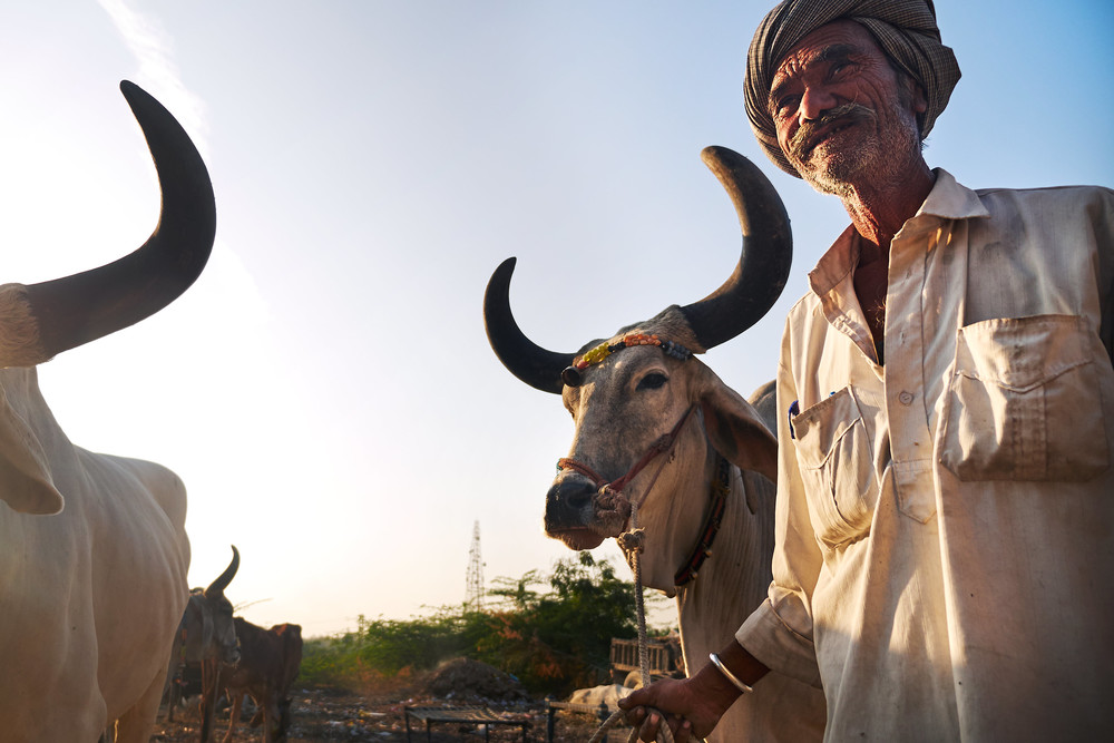 Nomad with his bullock
